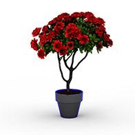 3D红牡丹模型
