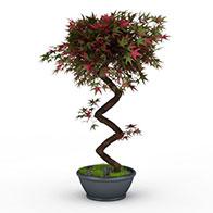 五角星叶子树3D模型