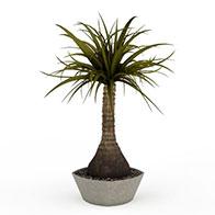 盆栽花草3D模型
