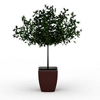 3D松树盆栽模型