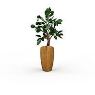 槟郎盆栽3D模型