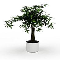 3D盆栽绿植模型