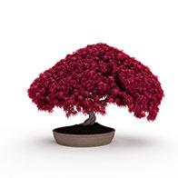 3D红色艺术盆景模型