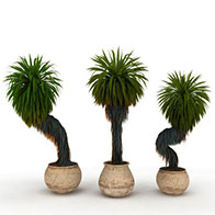 3D艺术园林盆景模型