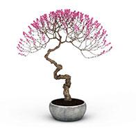 3D粉色梅花盆栽模型