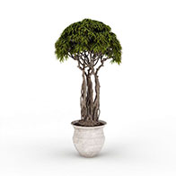 3D室外伞形盆栽模型