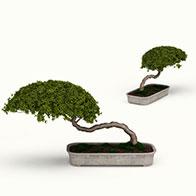 3D艺术蘑菇形盆景模型