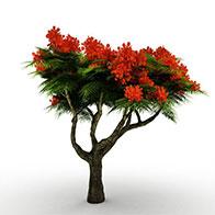 针叶红花树3D模型