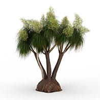 3D白花针叶灌木模型