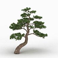 3D园林松柏模型