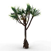 3D热带棕榈树模型