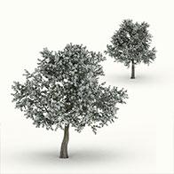 白花梨树3D模型
