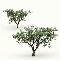 公园绿植3D模型