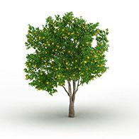 3D柠檬树果实模型