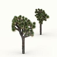 3D短叶丝兰模型