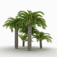 3D棕榈树林模型