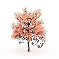 3D粉色树模型