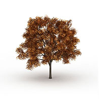 银杏树3D模型