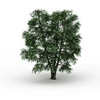 3D绿化树模型