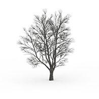 雪树3D模型