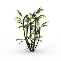 3D亚热带树模型