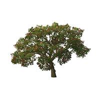 合欢树模型