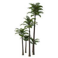 3D棕榈树模型