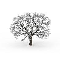 3D雪树模型
