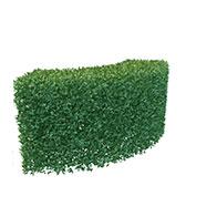 绿化植物3D模型