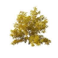 3D观赏灌木模型