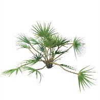 扇形植物3D模型